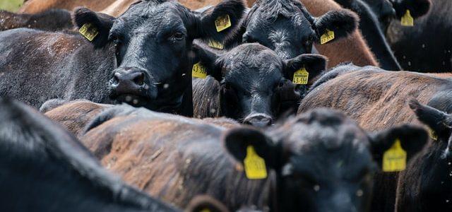Classified Procurement für die Fleischindustrie – 1/3